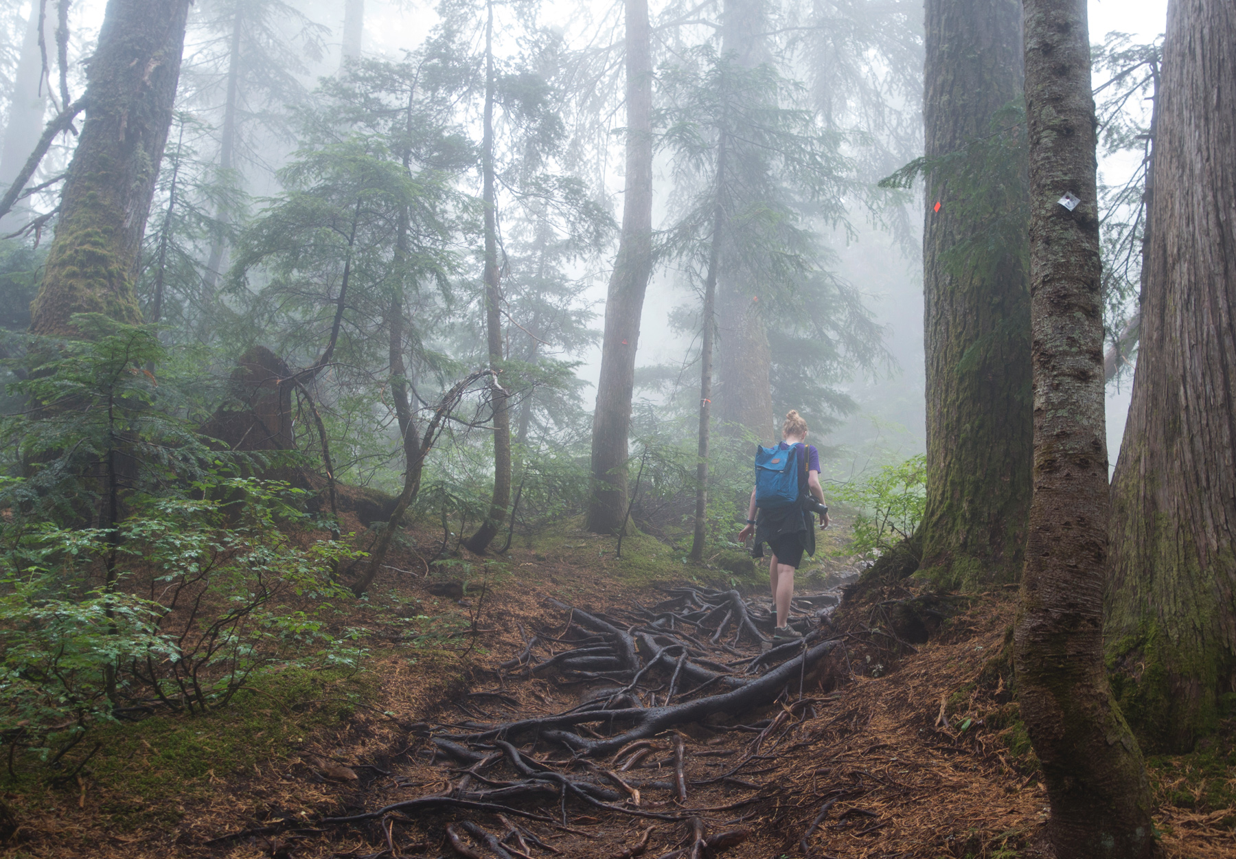 Hiking in the mist