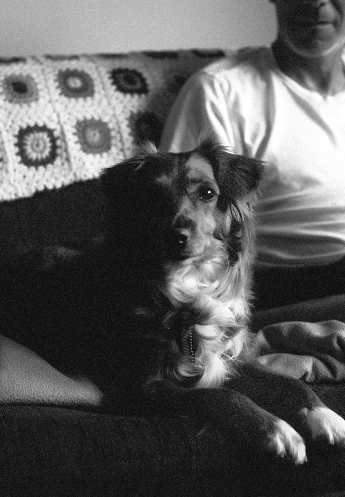 Dog sat on sofa