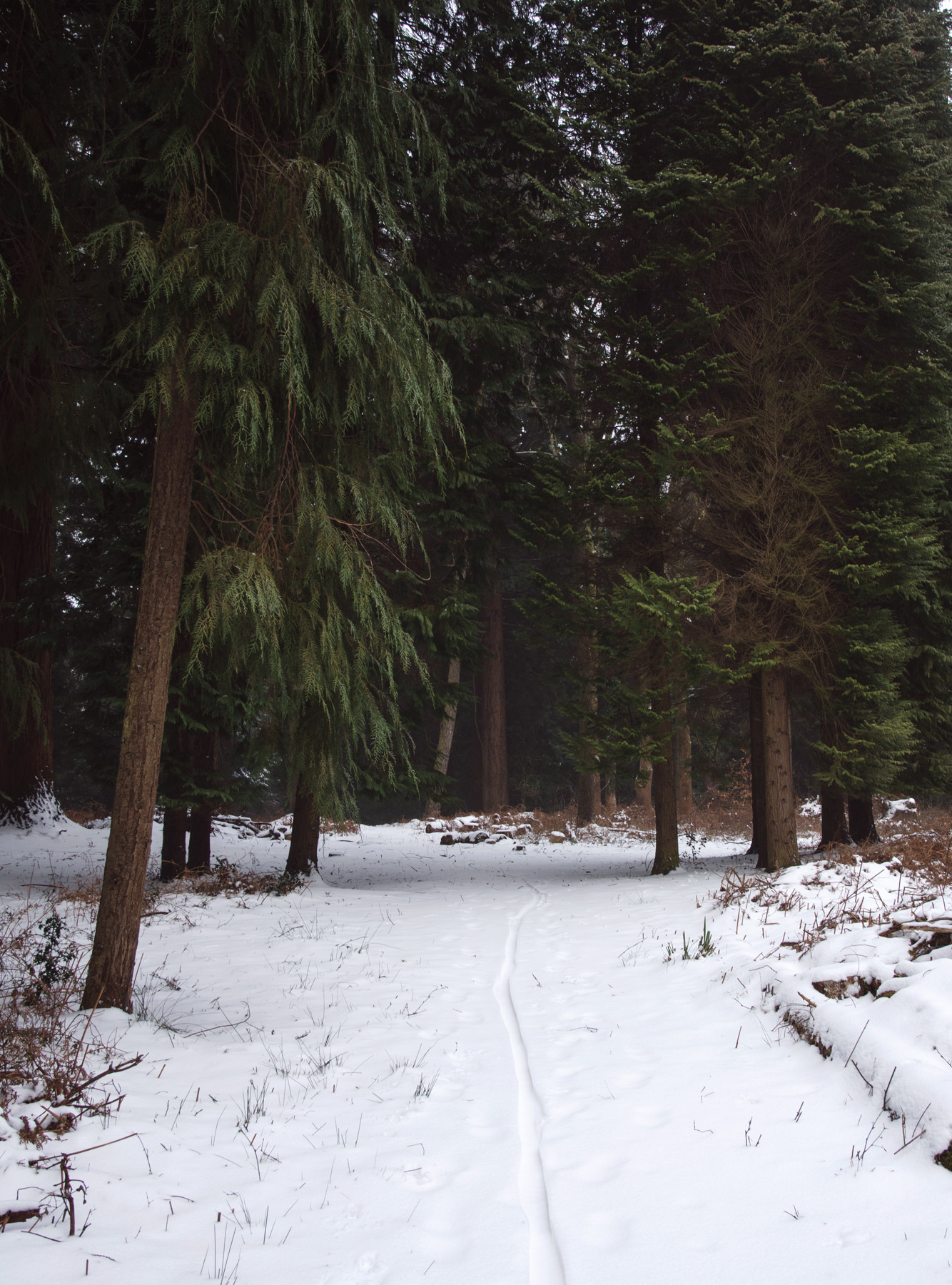 Snowy path into trees