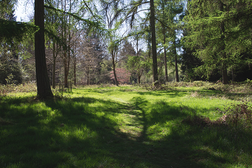 Forest path in grass