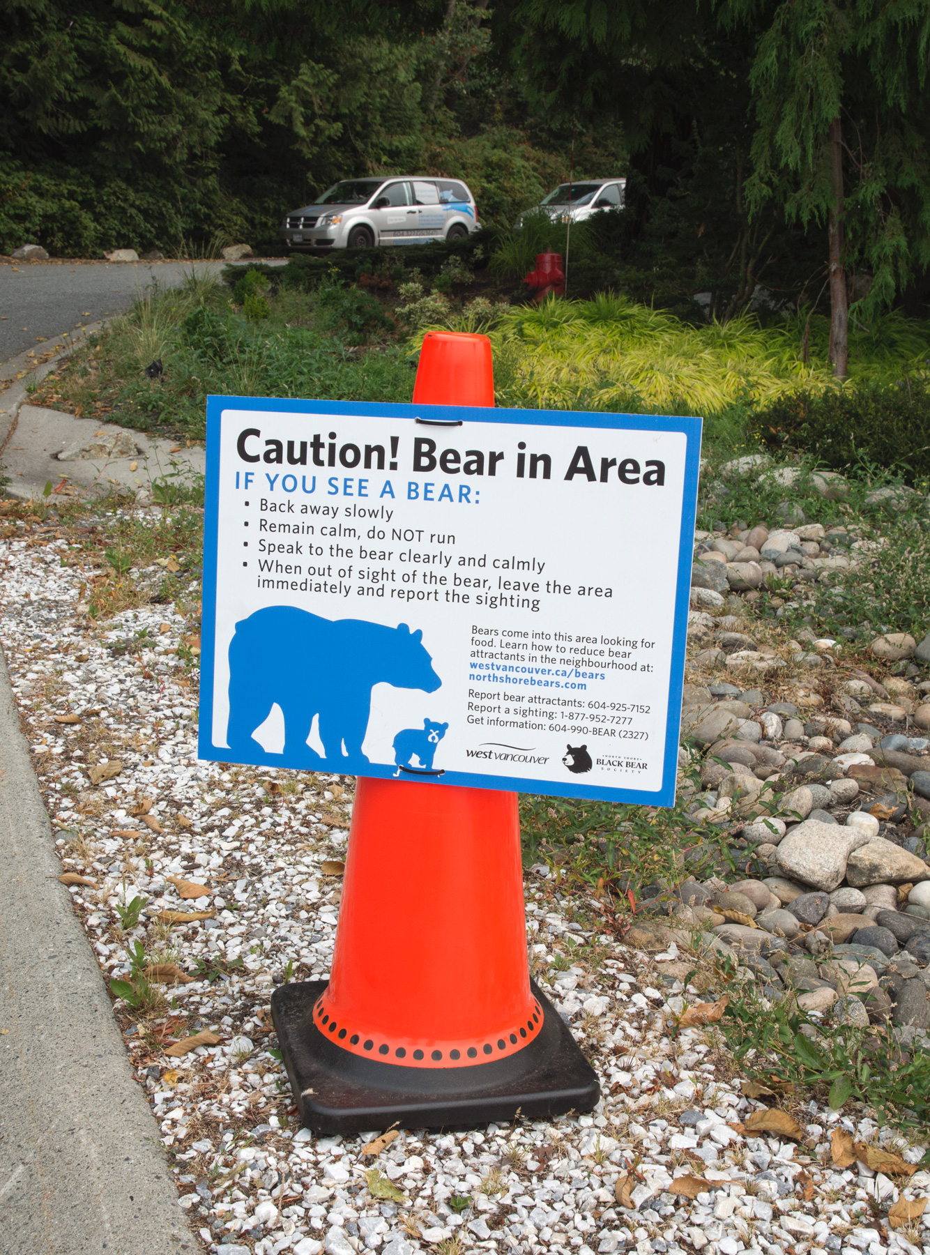 Bear warning sign on cone