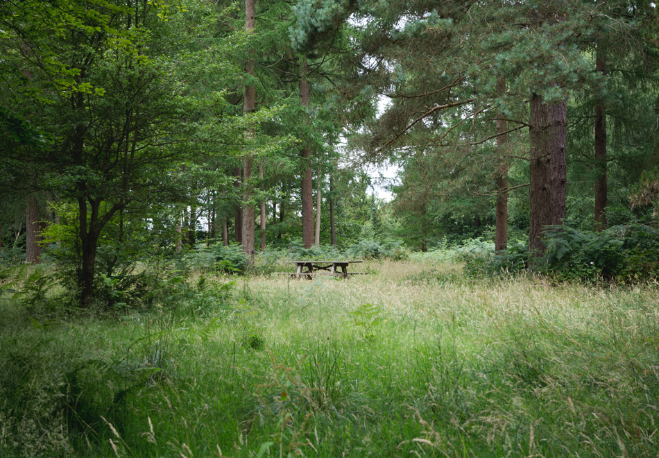 Bench in the forest