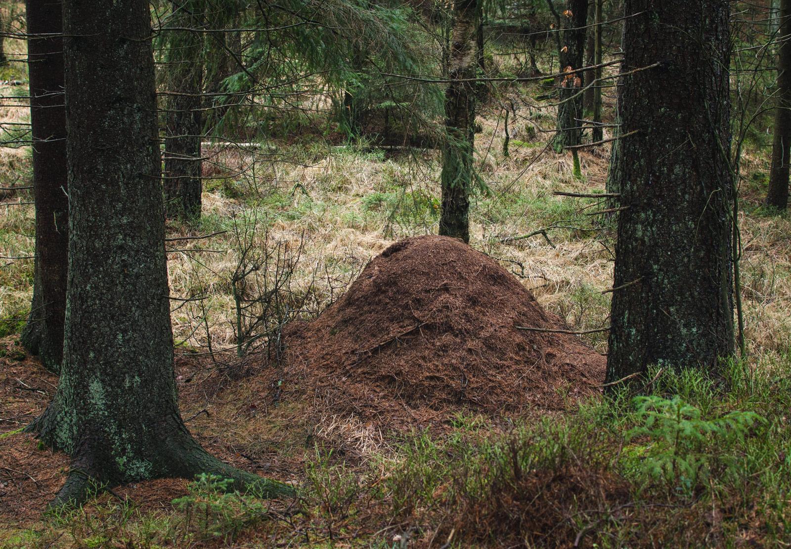 Dirt mound