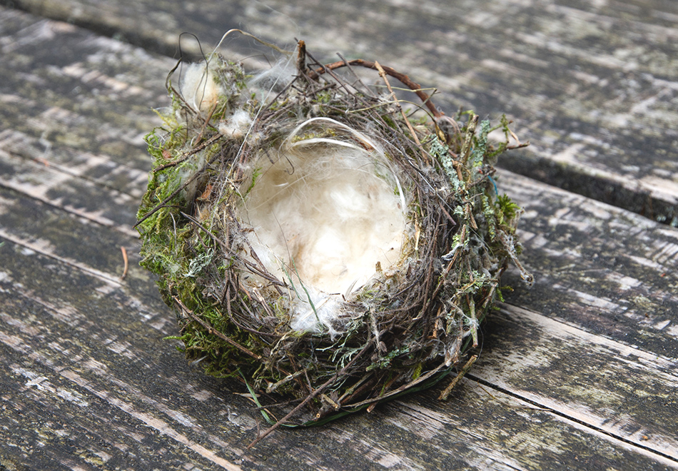 Birds nest on bench