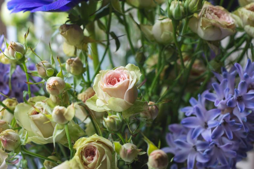 Pale pink rose bud