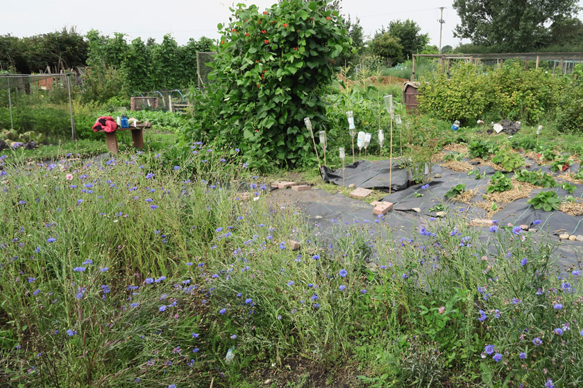 View of allotment