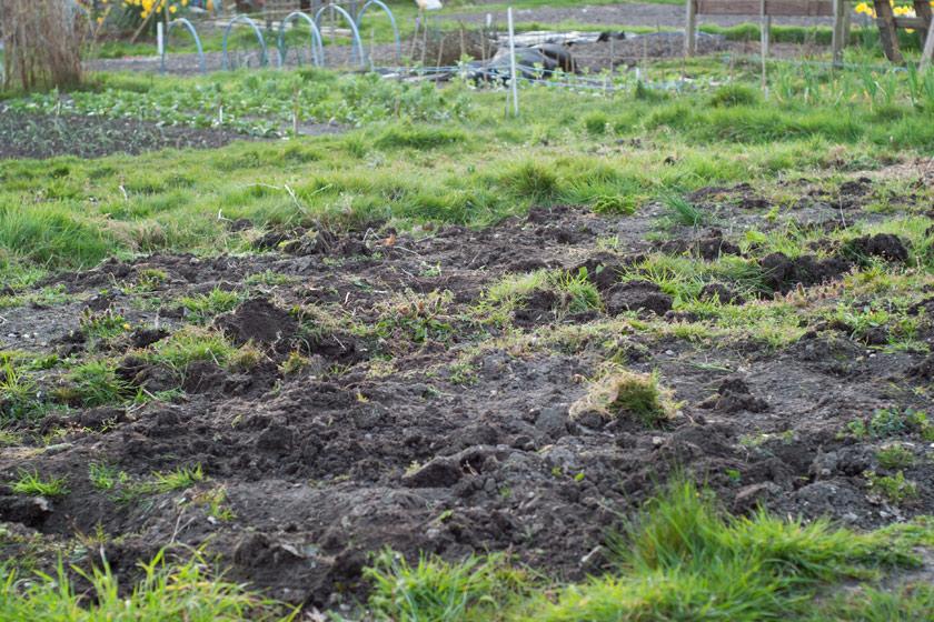 Roughly dug allotment plot