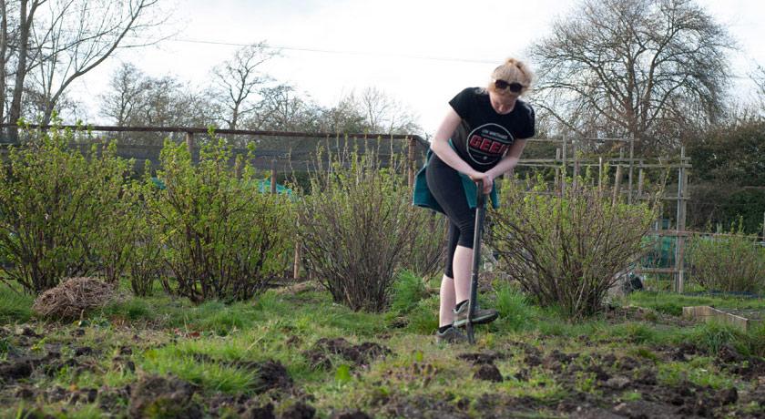Digging an overgrown allotment plot