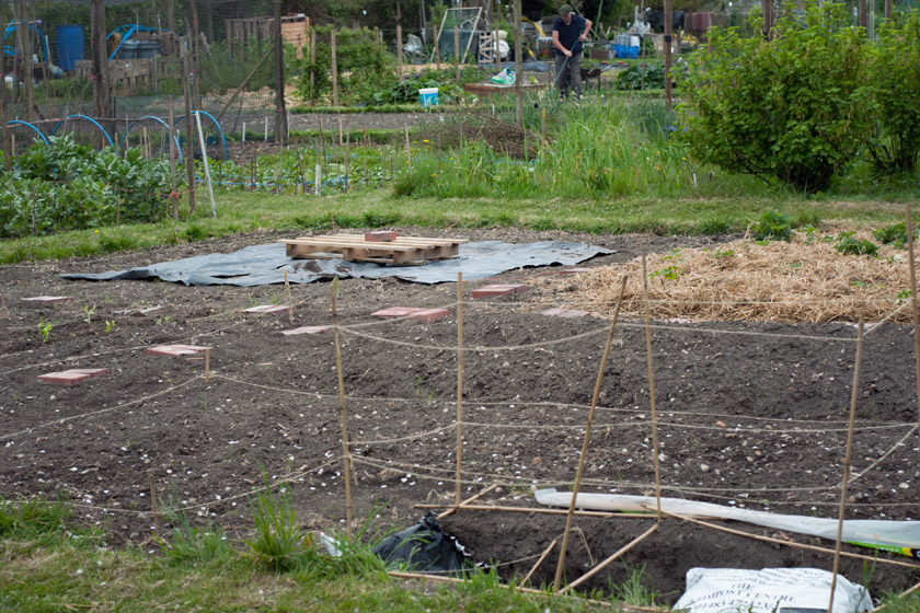Allotment patch in progress