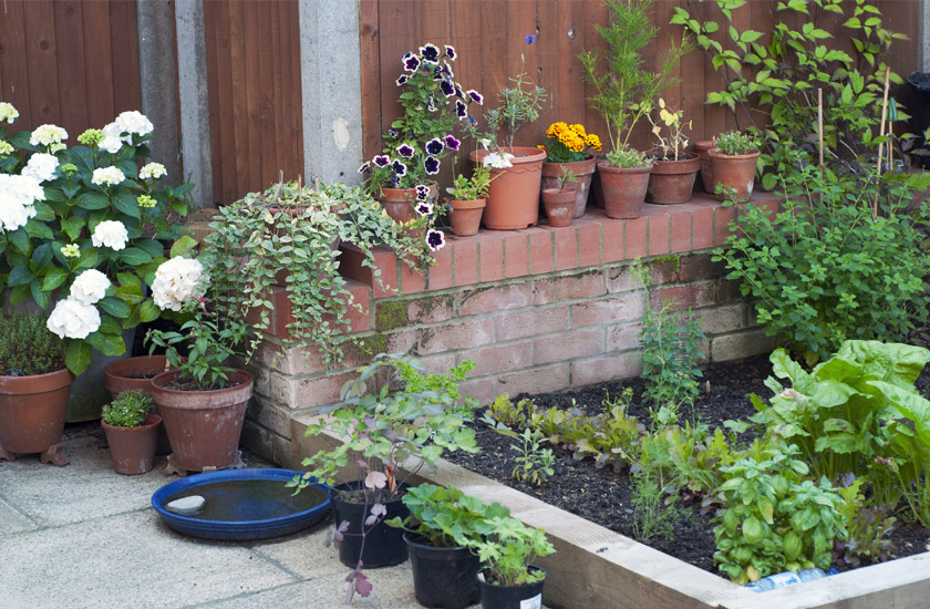 Raised beds and terracotta pots