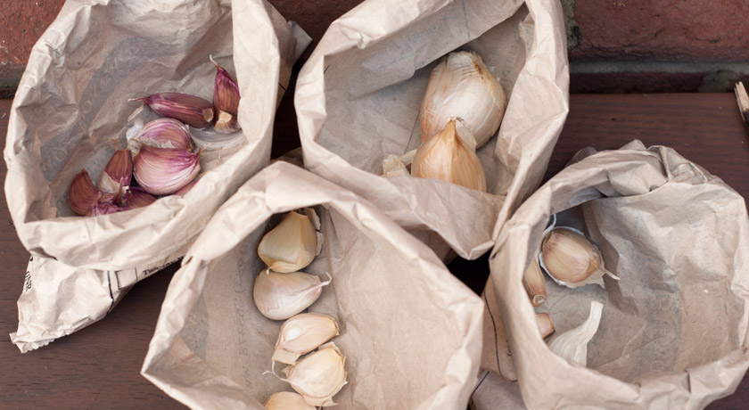 Bags of Autumn garlic cloves