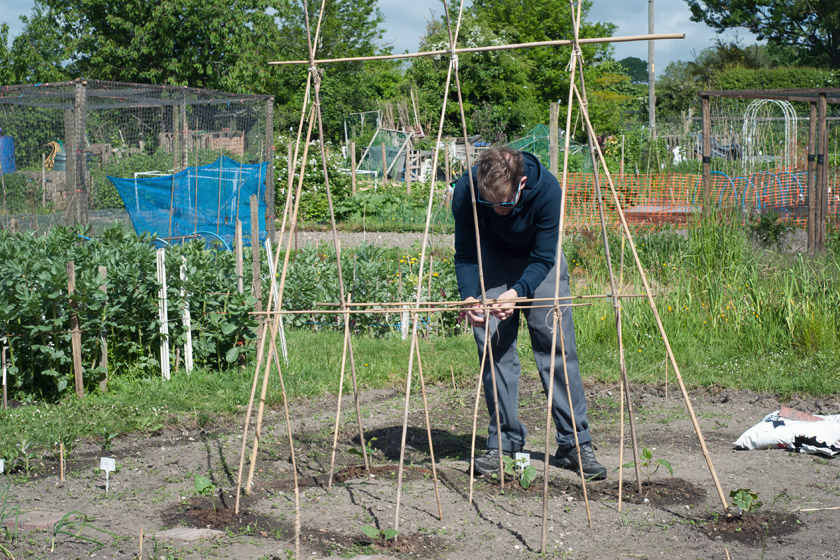 Tying bean poles together