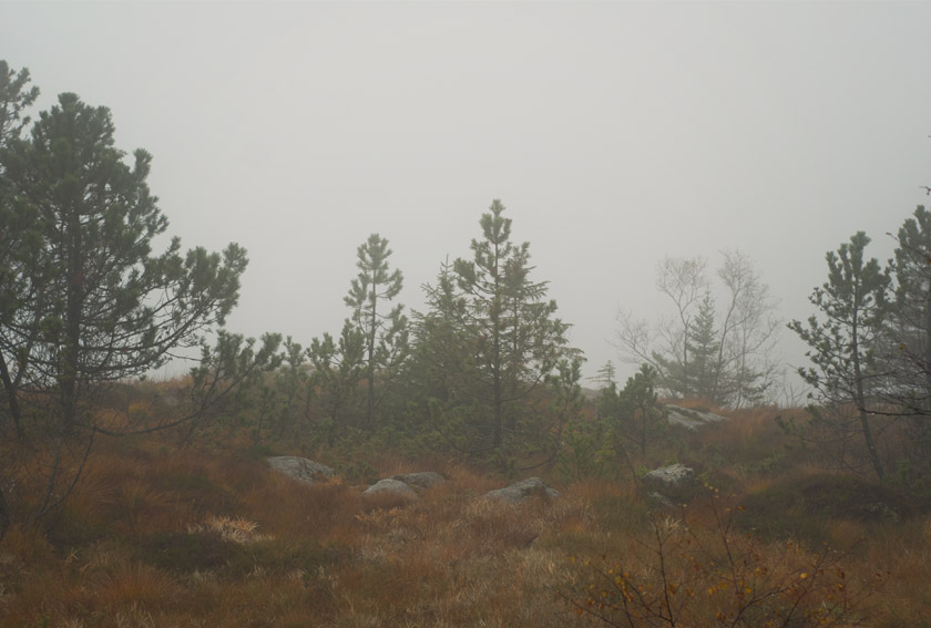 Trees on a misty mountain