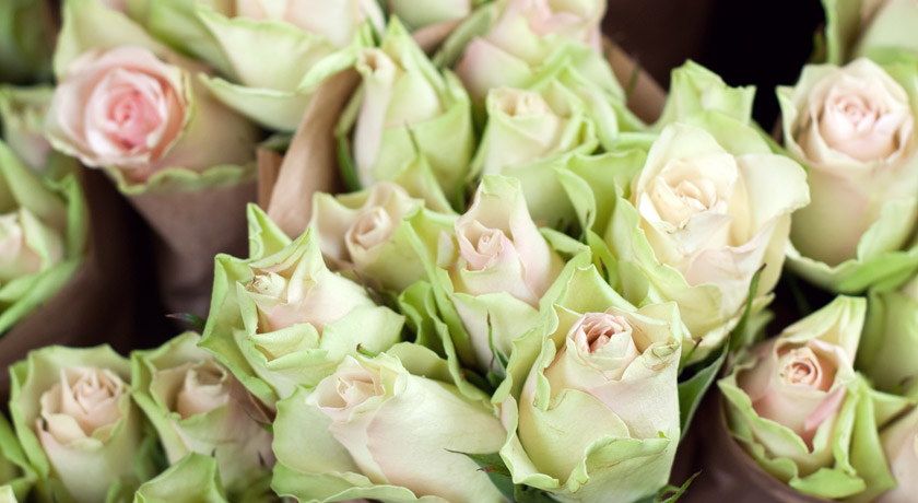 Bunches of mint green roses