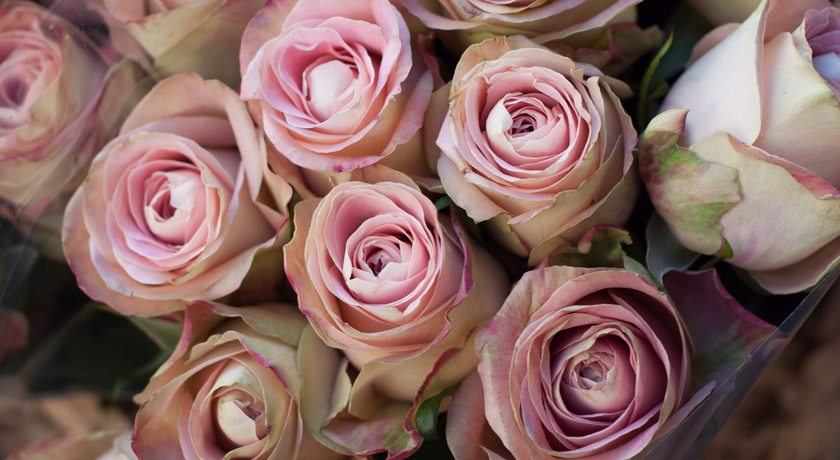 Bunches of dusky pink roses