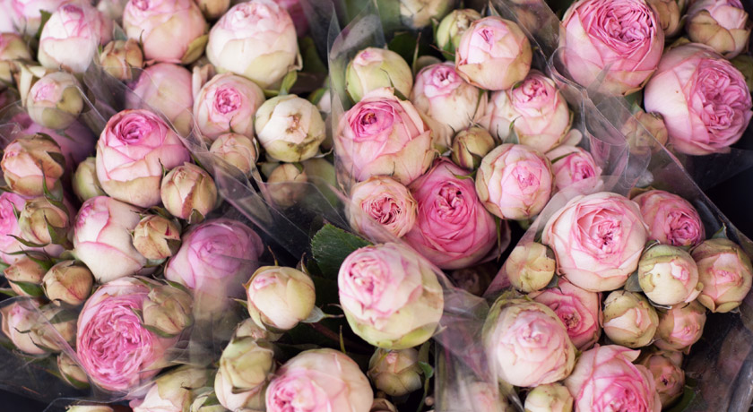 Bunches of pink peonies