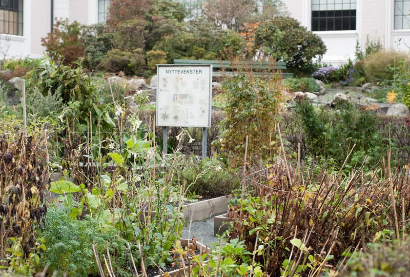 Museum vegetable garden