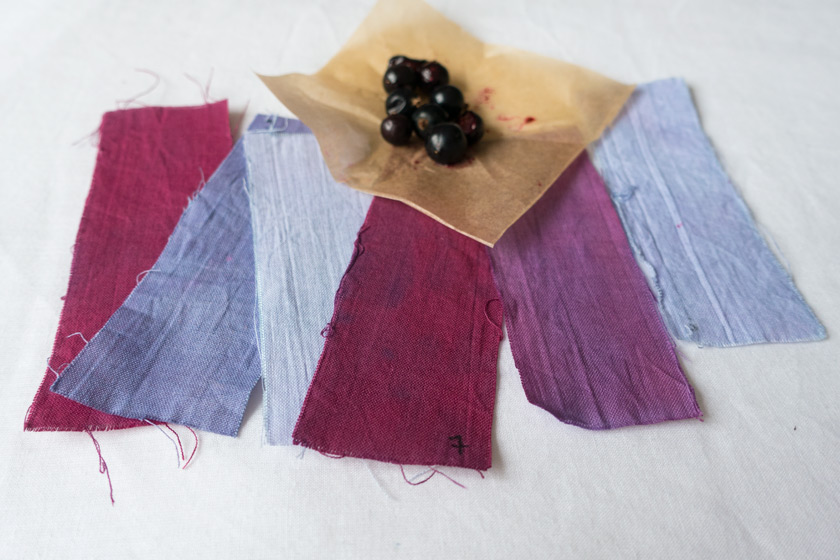 Plum and blue blackcurrant fabric