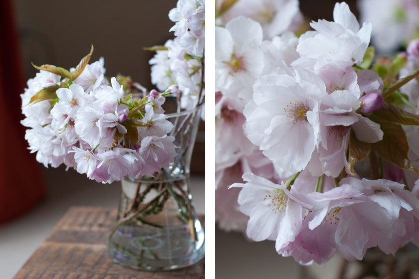 Vase of white and pink blossom