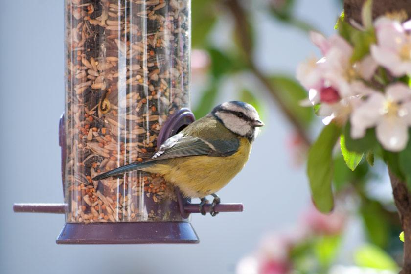 Blue tit sitting on feeder