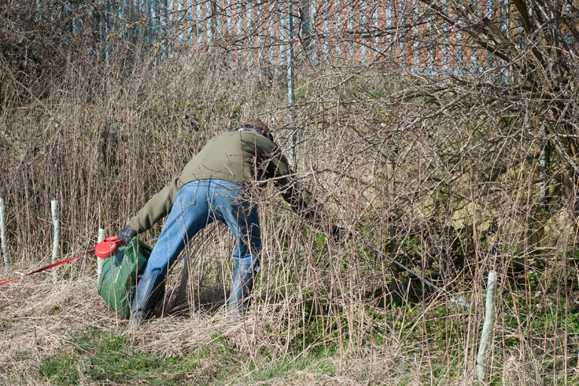 Man picking litter in bushes