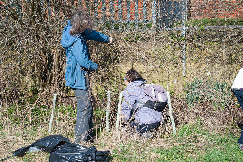Litter picking in bushes