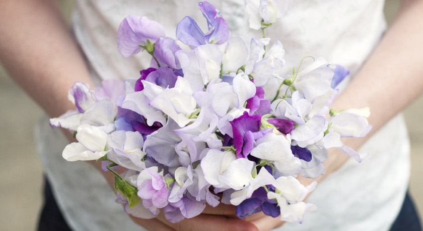 Pale purple and white sweet peas