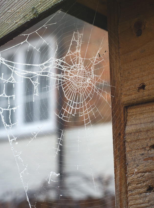 Cobweb on shed