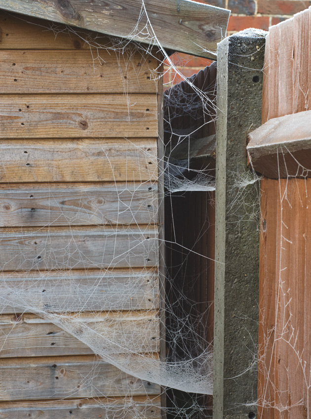 Large cobwebs on shed