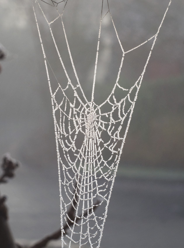 Cobweb covered in ice