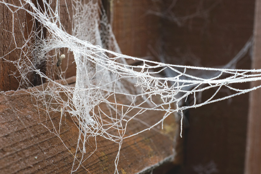 Damaged cobweb