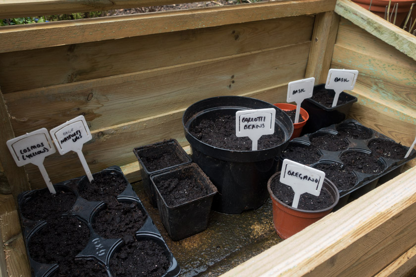 Pots in cold frame