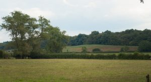 Fields with trees in the distance