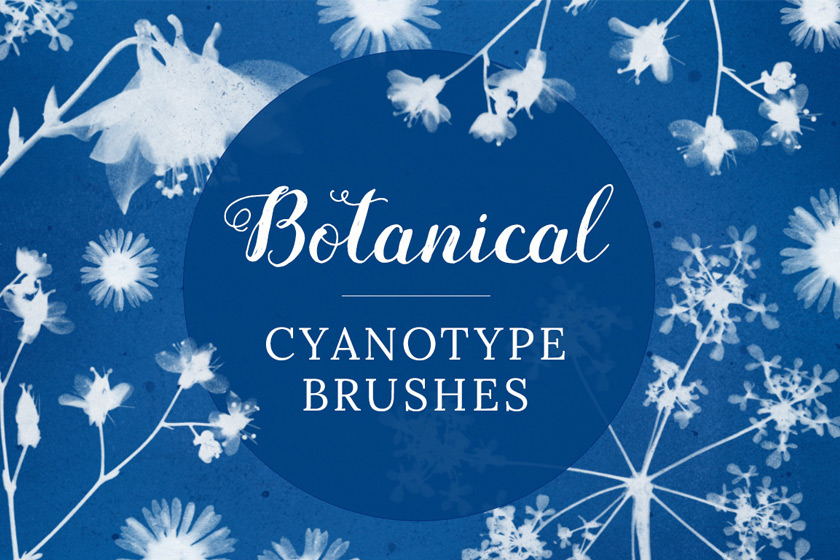 Botanical cyanotype