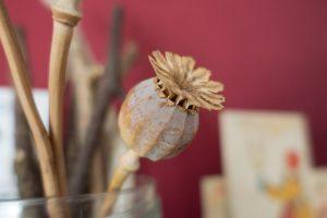 Dried poppy head