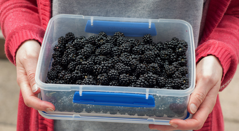 Tub of blackberries
