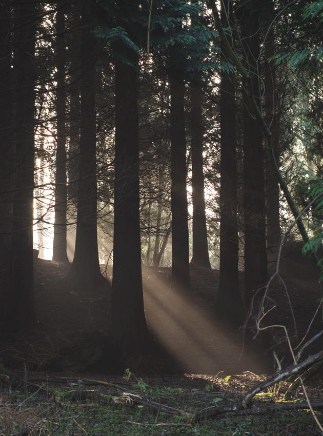 Sunlight beaming through trees