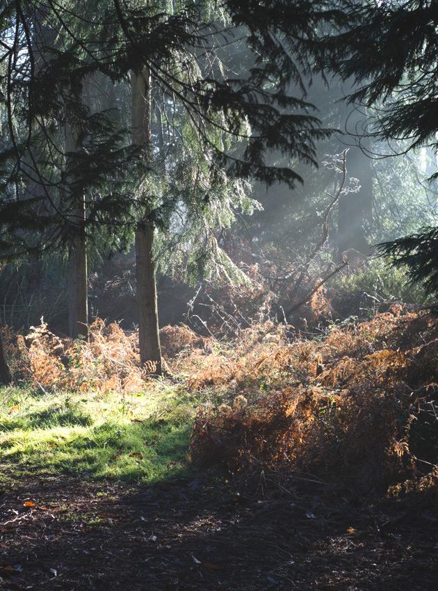 Light shining on trees