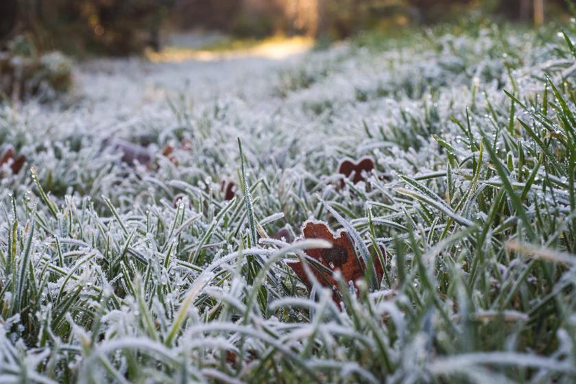 Thick frost on grass