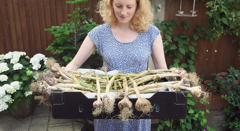Box full of garlic