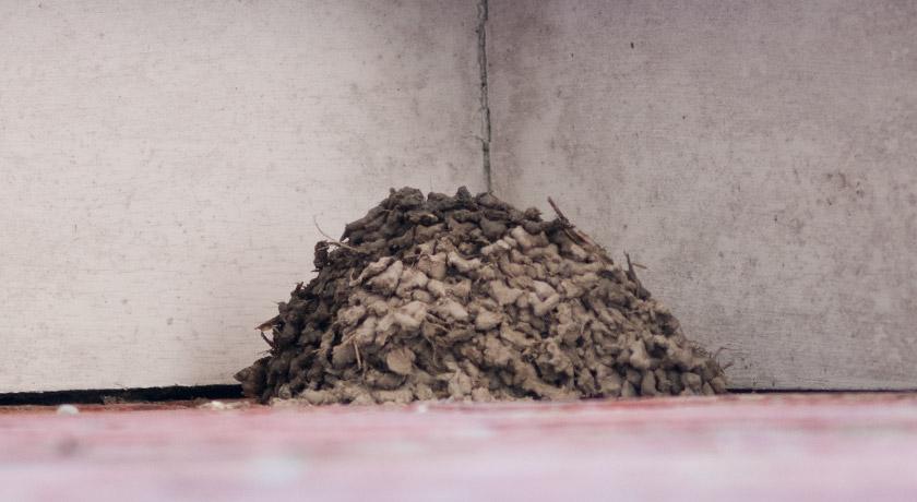 Incomplete house martin nest