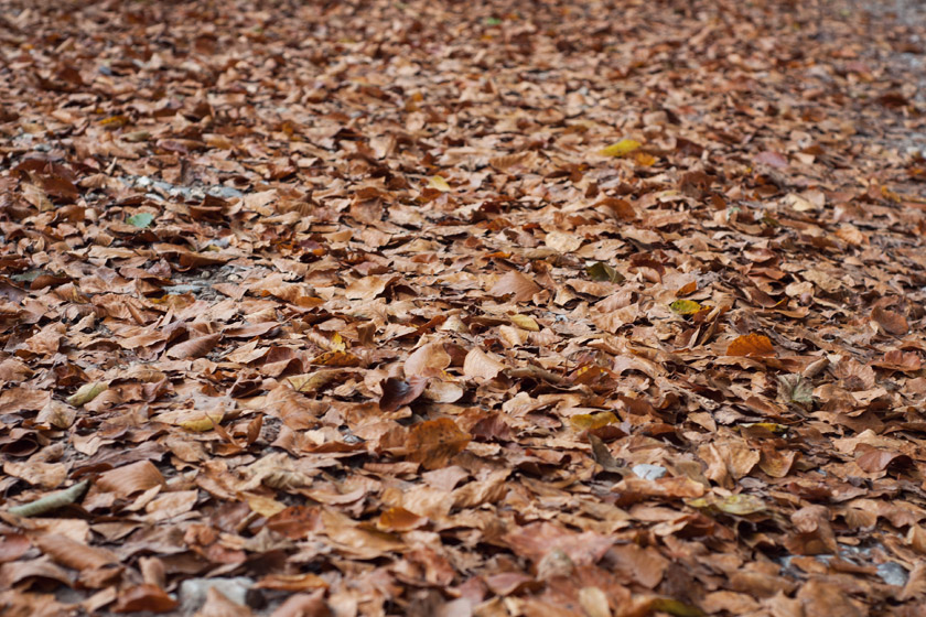 Leaves on path