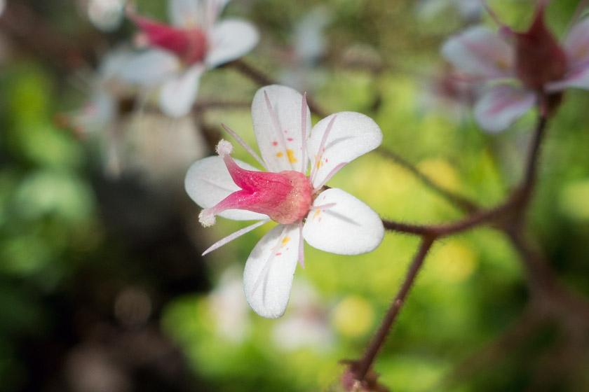 Pink flower centre
