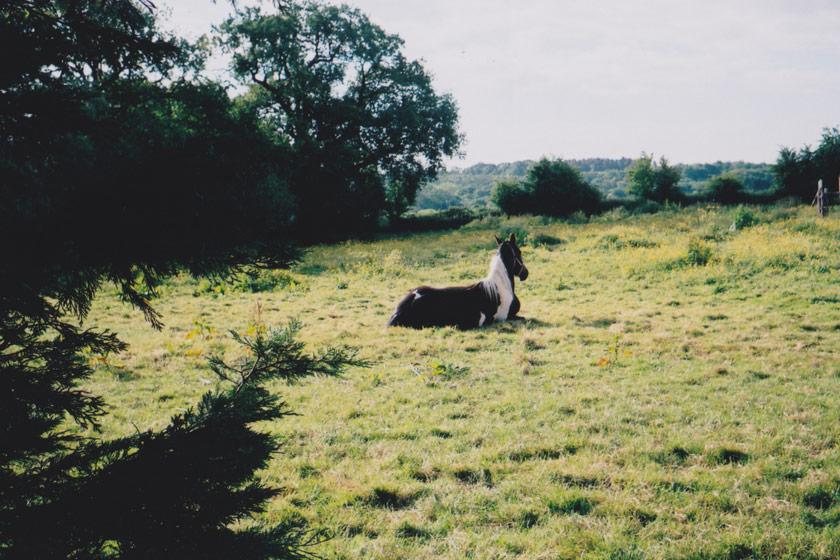 Horse sitting in field