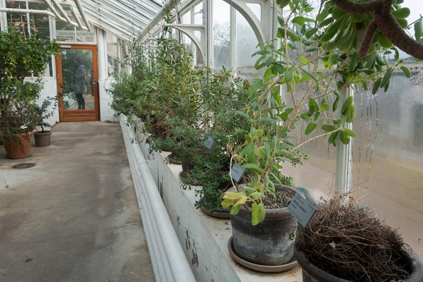 Plants inside glasshouse