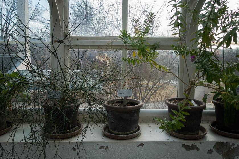 Pots on windowsill