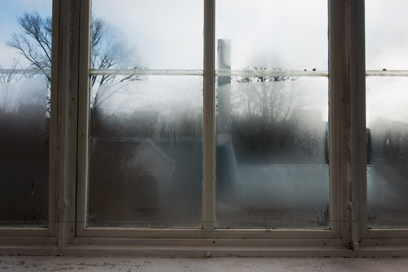 Steamy glasshouse window