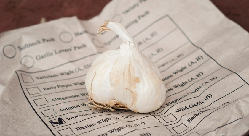 Garlic bulb on paper bag