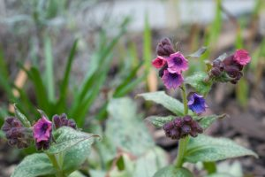 Small pink and purple flowers