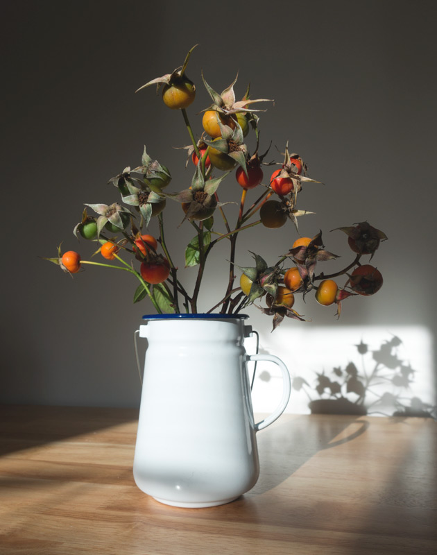 Rosehips in enamelware